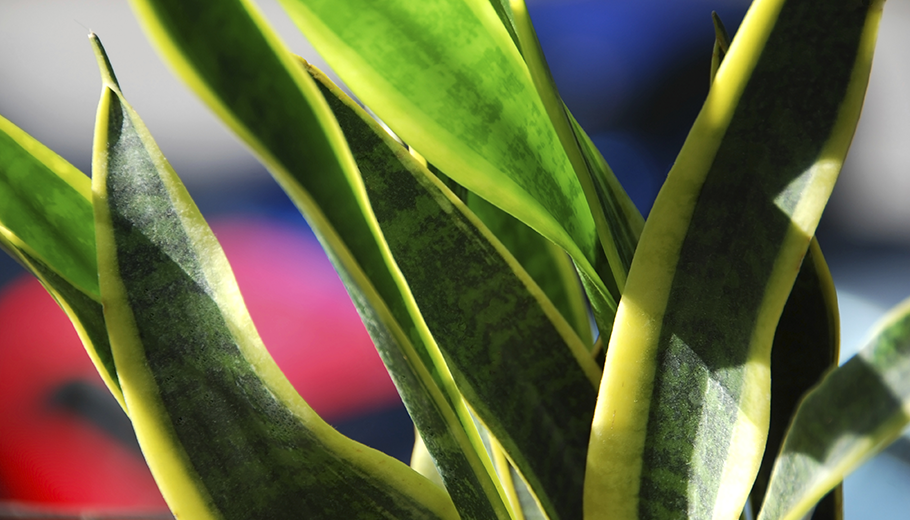 Air Purifying Plants 9 Cleaning Houseplants That Are Almost Impossible To Kill Greatist