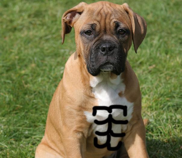 Boxer Abs
