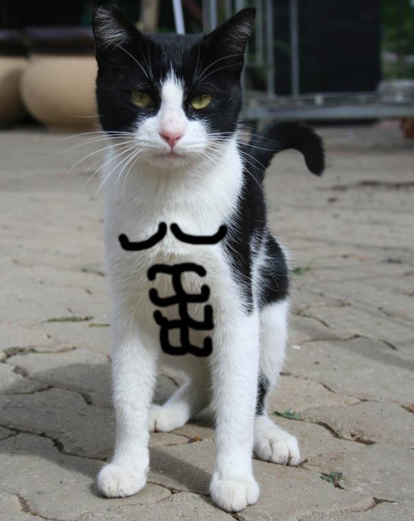Calico Cat Abs