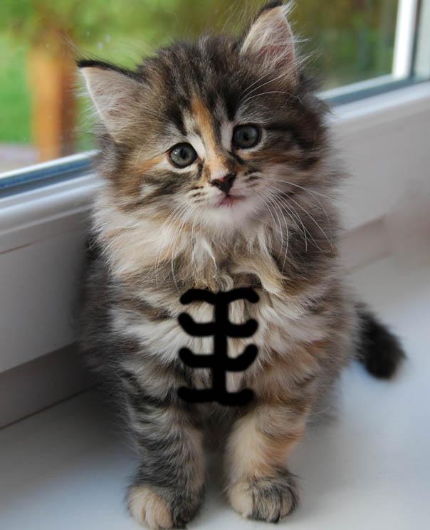 Cat Abs