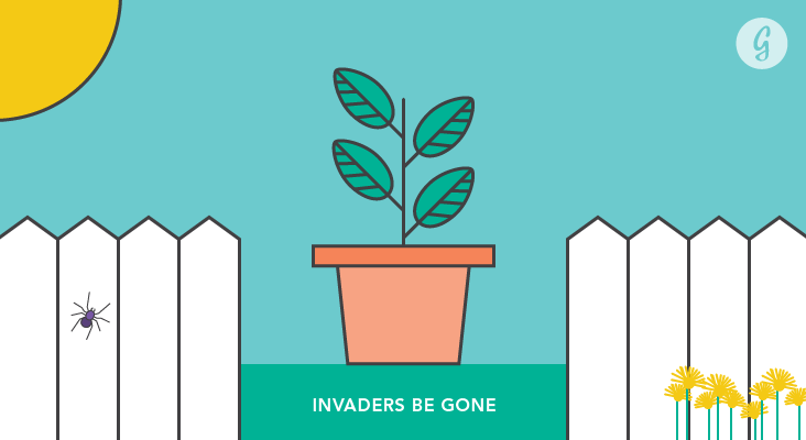 Invaders Be Gone