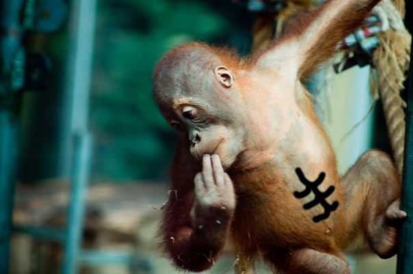 Orangutan Abs