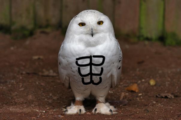 Owl abs