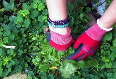 Garden to Improve Mental Health