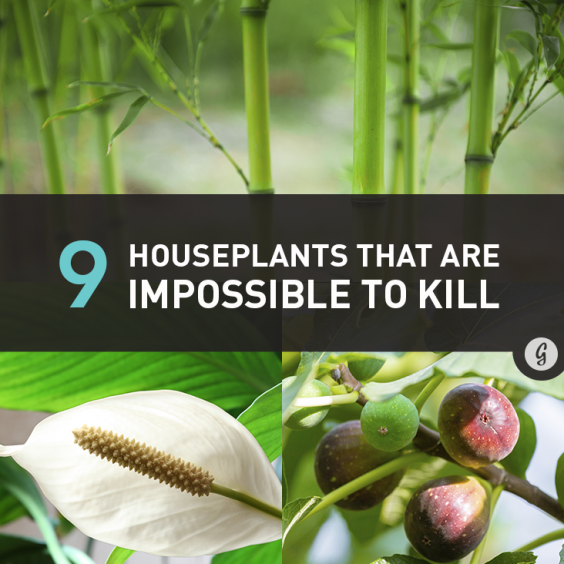 9 Houseplants That Are Almost Impossible to Kill