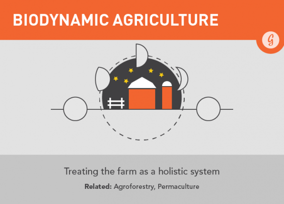 Biodynamic Agriculture: Hip New Food Trends