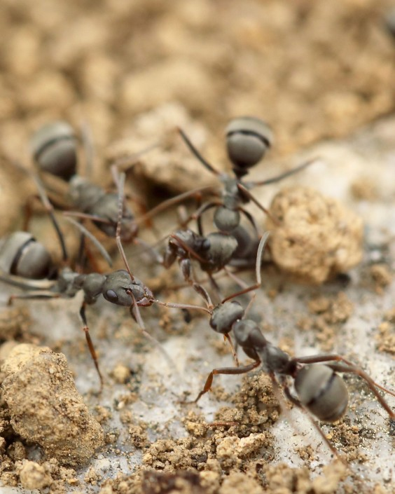 Small Black Ants In Kitchen And Bathroom - Sarkem.net