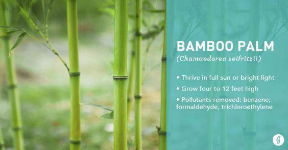 9 easytocare for houseplants that clean the air bamboo palm
