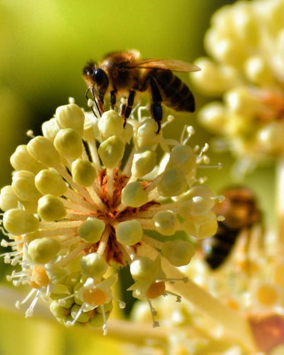 Bee. Household Bugs  Get Rid of Bed Bugs and More   Greatist