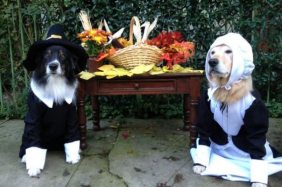 5 happy things animals dressed as pilgrims edition greatist