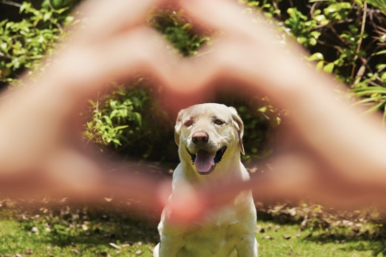 Dogs Good for Your Heart