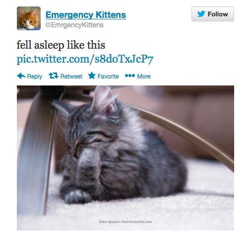 Emrgency Kittens