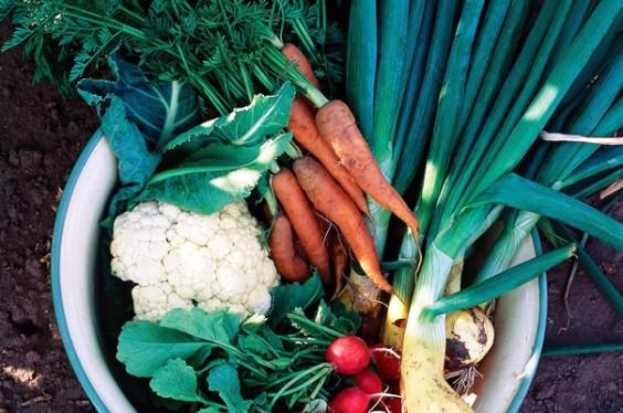 Fresh-Picked Vegetables