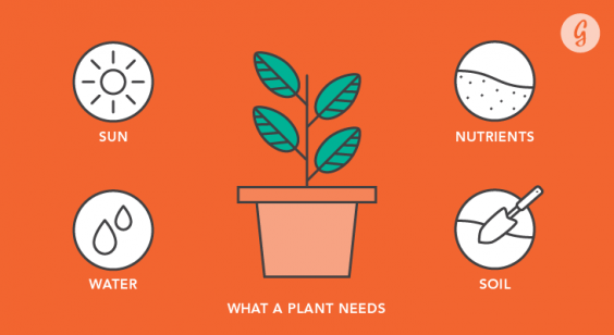 Everything You Need to Know Before Starting a Garden: What a Plant Needs