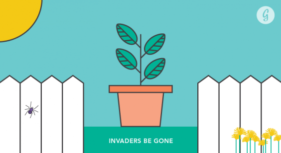 Everything You Need to Know Before Starting a Garden: Invaders Be Gone