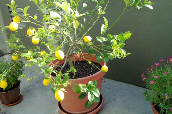 The 16 Best Healthy Edible Plants To Grow Indoors Greatist
