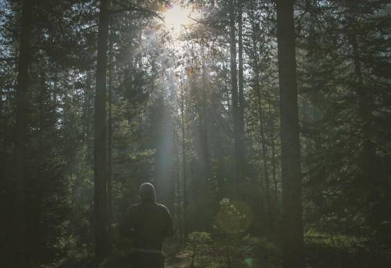 Man Walking in the Woods