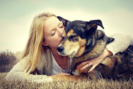 Social Dogs