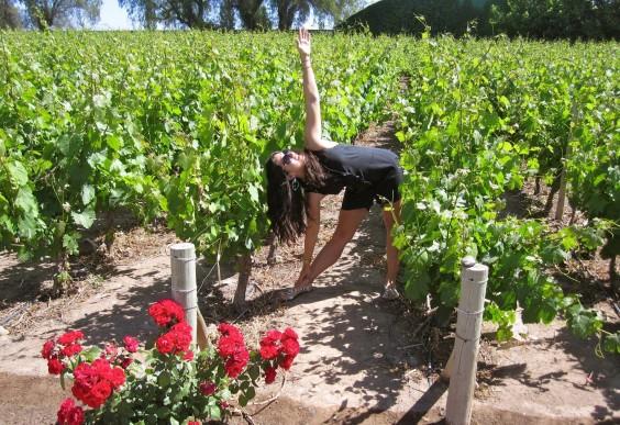 Amanda Delaney: Yoga in Vineyard