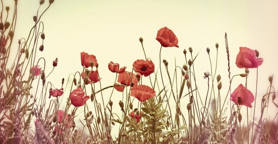 40 Ways to Reduce Stress: Smell Flowers