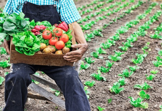 How Millennials Faked the Food Movement: man farming fresh vegetables