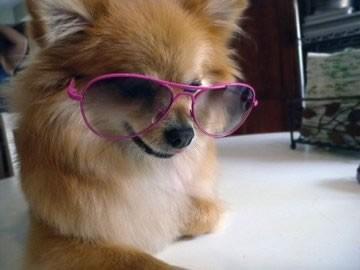 Dog In Shades
