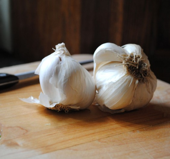 Garlic_sq
