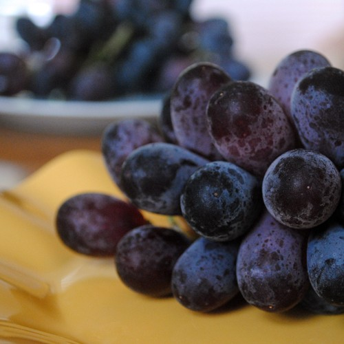 Grapes_sq