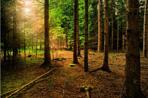 thoreau woods quote