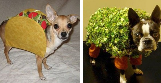 Healthy Halloween Costumes for Your Dog: Taco and Chia Pet