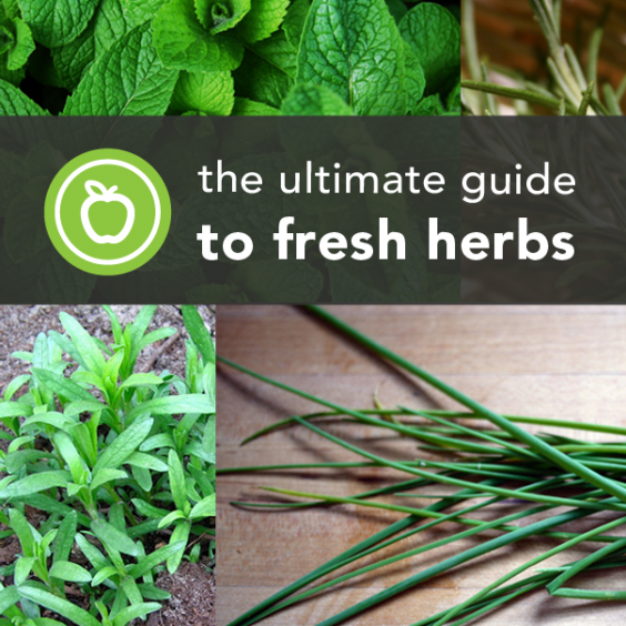 Ultimate Guide to Fresh Herbs