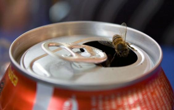 Soda Can Bee