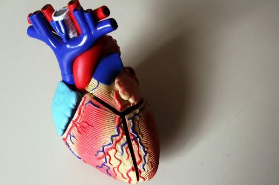 3d printer heart