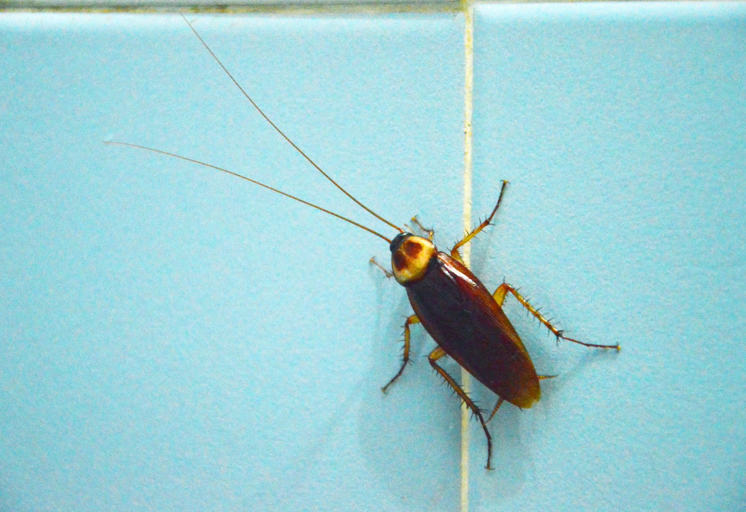 Bugs commonly found in bathrooms