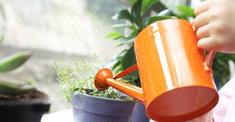 the 16 best healthy edible plants to grow indoors greatist. Black Bedroom Furniture Sets. Home Design Ideas