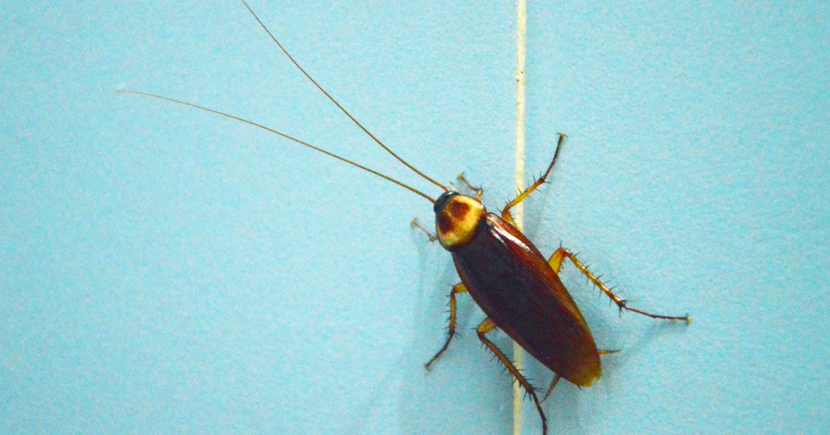 Pesticides Effective Against Bed Bugs