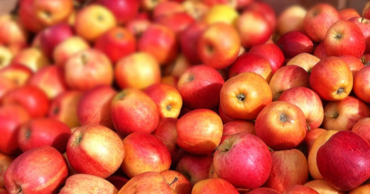 Apples  The Superfood U0026 39 S Health Benefits