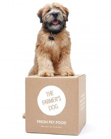 5 Dog Food Brands Making Healthy Eating Easier for Fur Babies - image 213334