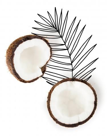 Coconuts - Kind