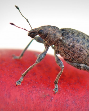 Household Bugs: Get Rid of Bed Bugs and More
