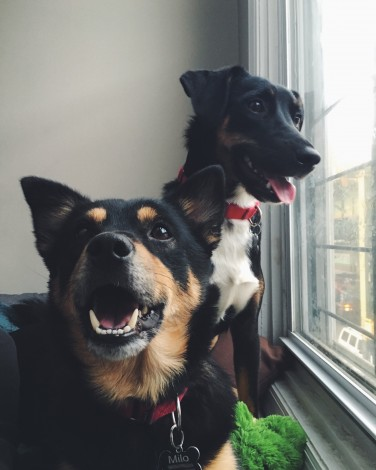 The author's two dogs, who look extremely happy