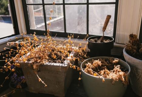 Dead Plants