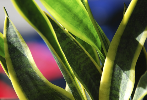 9 Houseplants That Are Impossible to Kill