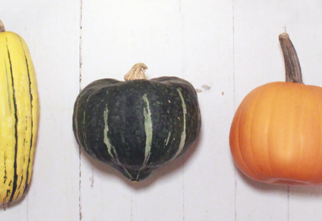 Oh My Gourd! 55 Healthy Seasonal Squash Recipes