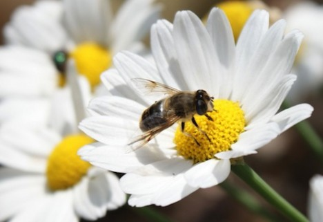 Where Have All the Bees Gone? (And What Does It Mean for Our Food?)