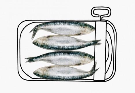 Sardines - Amino Acids