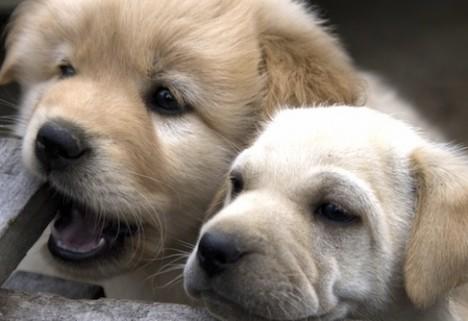 Puppies_*
