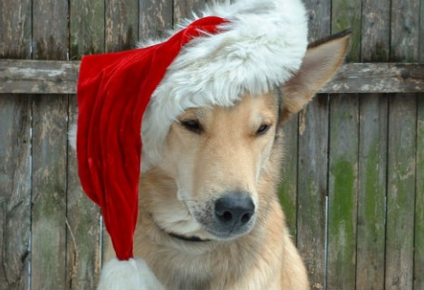 5 Happy Things: Dogs in Santa Hats Edition