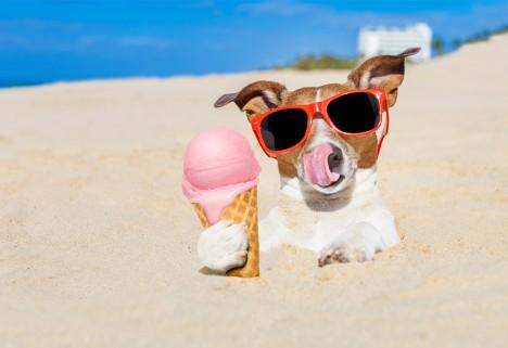 Dog Eating Ice Cream on Beach