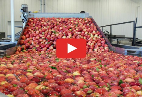 Food Processing Apples